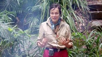 Dschungelcamp 2020: Sonja Kirchberger erklärt ihre Attacke gegen Danni Büchner