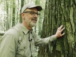 peter wohllebens bücher: im märchenwald