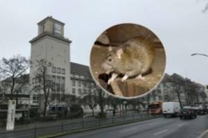 Schon wieder kein Strom: Stromausfall im Rathaus Tempelhof: Sind Ratten schuld?