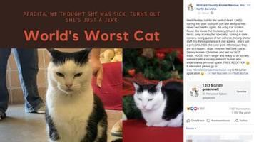 North Carolina: Schlimmste Katze der Welt von Tierheim zur Adoption freigegeben