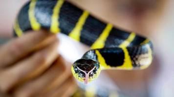 Coronavirus in China: Schlangen als Überträger? Warum es noch zu früh ist, diese Aussage zu treffen