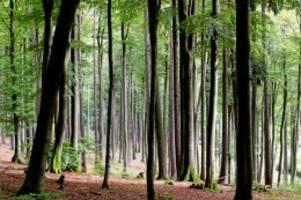 diskussion: glinder grüne blitzen mit eigenem umweltamt ab