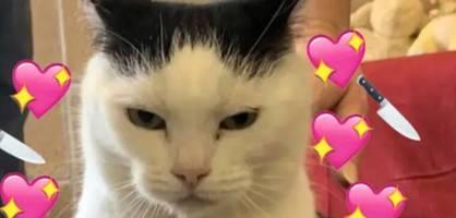 """Perdita ist """"die schlimmste Katze der Welt"""""""