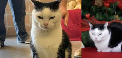 """Tierheim gibt """"schlimmste Katze der Welt"""" zur Adoption frei"""