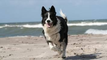 urlaub mit hund: tipps und tricks – darauf sollten sie achten