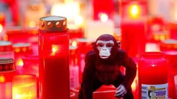 Brand im Affenhaus: Öffentliche Veranstaltung für den Zoo