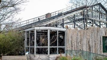 Neues Affenhaus beschlossen: Krefelder Zoo plant Neubau