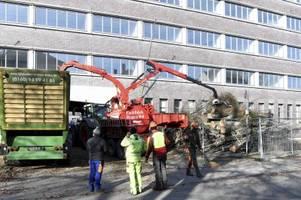 Aufregung um gefällte Bäume im Stadtjägerviertel