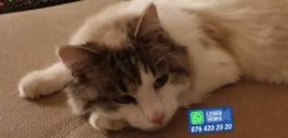 Aesch BL: Katzenleiter verboten - Kimba fährt Körbchen