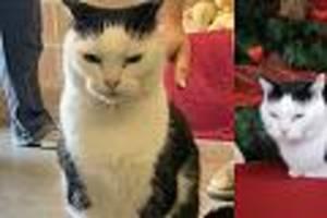 """in den usa - tierheim gibt """"schlimmste katze der welt"""" zur adoption frei"""