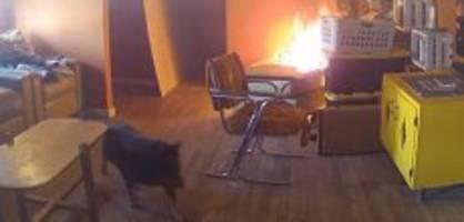 New Mexico: Hund setzt Haus in Brand