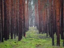 geplantes werk in brandenburg: tesla versetzt ameisen