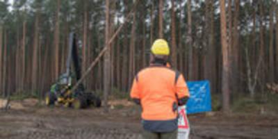 geplante tesla-fabrik bei berlin: die bäumen fallen früher