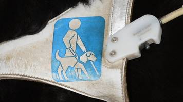 bgh-urteil - blinde frau bekommt recht: führhund darf mit in arztpraxis