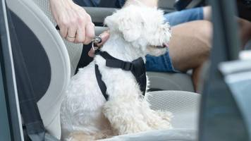Sicherheit für Mensch und Tier: Hunde im Auto transportieren: Das müssen Fahrzeughalter beachten