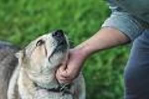 focus-online-dogcast - es fängt beim ignorieren an: warum gewalt in der hunde-erziehung ein no-go ist