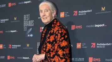 Zerstörung der Erde: Jane Goodall versteht das Verhalten von Menschen nicht