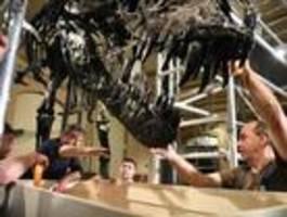 Ein Dinosaurier-Umzug ist ein echter Knochenjob