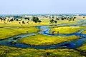 kostet normalerweise bis zu 2000 dollar pro nacht - okavango-delta: so erleben sie das berühmteste sumpfgebiet der erde mit kleinem budget