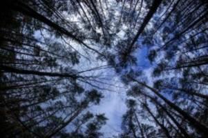 agrar: trockenheit stresst bäume: sichtbare schäden verdoppelt