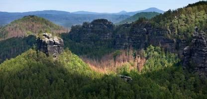 waldsterben: schäden massiver in deutschland als angenommen - 245.000 hektar baumbestand zerstört
