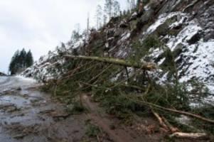 Agrar: Große Schäden in Niedersachsens Wäldern