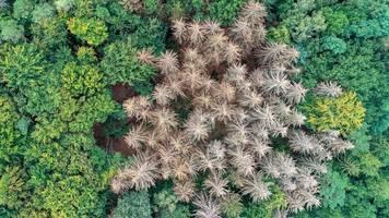Schätzung: Wieder überdurchschnittliche Waldschäden erwartet