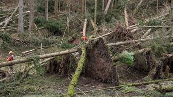schäden in deutschen wäldern größer als bisher angenommen