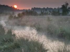 Umwelt: Wie Moore beim Kampf gegen den Klimawandel helfen