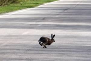 Schleswig-Holstein: Hase verursacht Unfall mit vier Pkw – Frau schwer verletzt