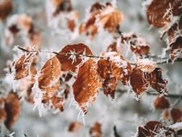 die wetterwoche im schnellcheck: polarluft mit nachtfrost und happy end