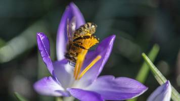 bayerns bauern säen blumen für die bienen