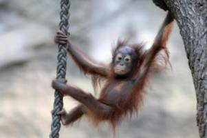 tiere: zoo rostock wegen corona-krise zu: langsam wird es eng