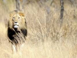safari-tourismus: angst in afrika