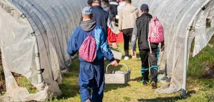 Bauern verzweifelt – Unionspolitiker schreiben Brandbrief an Merkel
