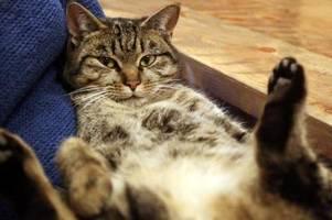 mann hält 70 katzen in wohnung - 43 tiere beschlagnahmt
