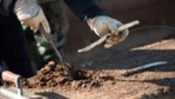 saisonarbeiter: erntehelfer dürfen unter auflagen doch nach deutschland kommen