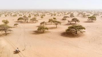 Mega-Projekt Savannenwald: Hier entsteht Afrikas große grüne Mauer