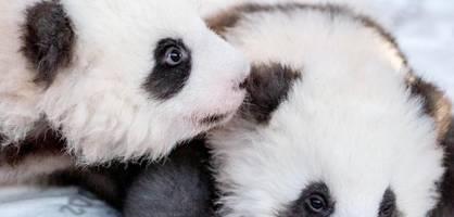 Für die Tiere im Zoo beginnt eine neue Zeit