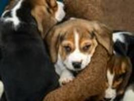 Hundewelpen aus Auto gerettet