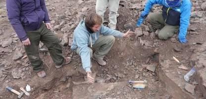dinosaurier-fund in argentinien: so tödlich wie t-rex