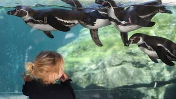zoos spüren starkes besucher-interesse: zeitslots ausgebucht