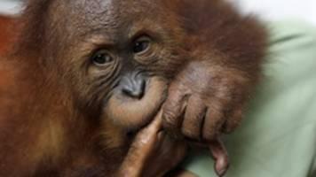 bilderstrecke: wie der mensch die artenvielfalt gefährdet