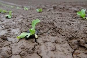 Wasserversorgung: Dürregefahr im Sommer: Lohnt sich der Brunnenbau im Garten?