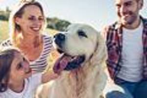 focus-online-dogcast - urlaub mit hund: tiertrainerin beantwortet die wichtigsten fragen - und nennt no-go