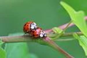 """Um Insektenschwund besser zu verstehen - Naturschutzbund startet großen Aufruf: """"Alles zählen, was sechs Beine hat"""""""