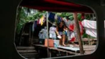 brasilien: jetzt wird das amazonasgebiet geplündert