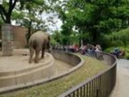 Besucher im Berliner Zoo bleiben nicht auf Abstand