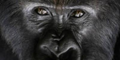 digitale gorillaprojekte in ruanda: virtuelles afrika