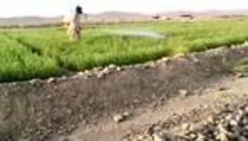pakistan: militär geht gegen heuschreckenplage vor